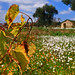 Italian vineyard by Gianfranco Budano