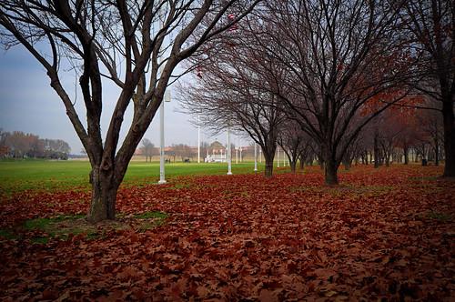 blue autumn trees sky fall leaves landscape gazeebo paradegrounds offuttafb nikond5000 nikon1024mm