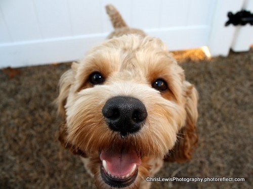My Dog BRUCE_Feb 2009-2