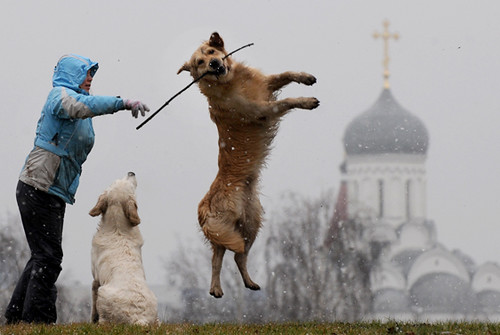 Belarus-weather-animals