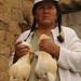 Two Big Guinea Pigs - Outside Cuenca, Ecuador