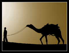 Man and camel in silhouette on a dune