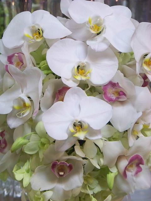 Orchid Wedding Flower Arrangements Flickr Photo Sharing