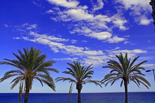 Mil palmeras