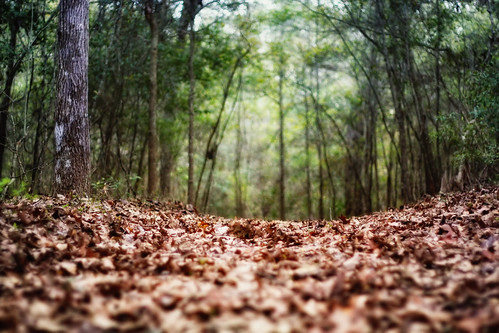 trees forest myrtlebeach woods path southcarolina fallenleaves canon1022mm groundperspective meherspiritualcenter canon450d