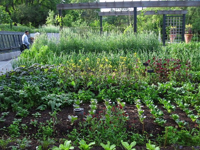 The Herb Garden in spring. Photo by Rebecca Bullene.