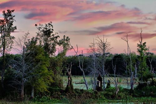 pink trees sky lake water clouds explore swamp wetlands marsh hdr brazosbendstatepark img8272 canonef100mmf28lmacroisusm assignmenthouston41 oldhorseshoelake