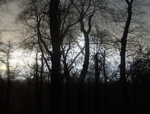 Trees, Knole Park
