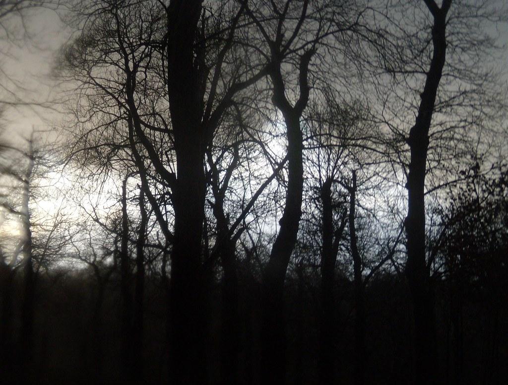 Trees, Knole Park Leigh to Sevenoaks