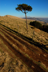 Solitary Tree, Back Tor