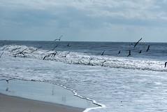 Sea gulls over water
