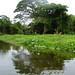 Small photo of Buscando una isla perdida