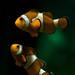 Cuando Marlin encontró a Nemo.. by www.saramusico.com