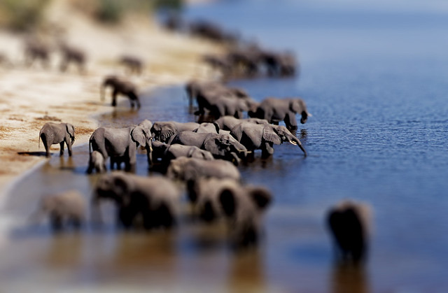 Tilt shift effect - elephants