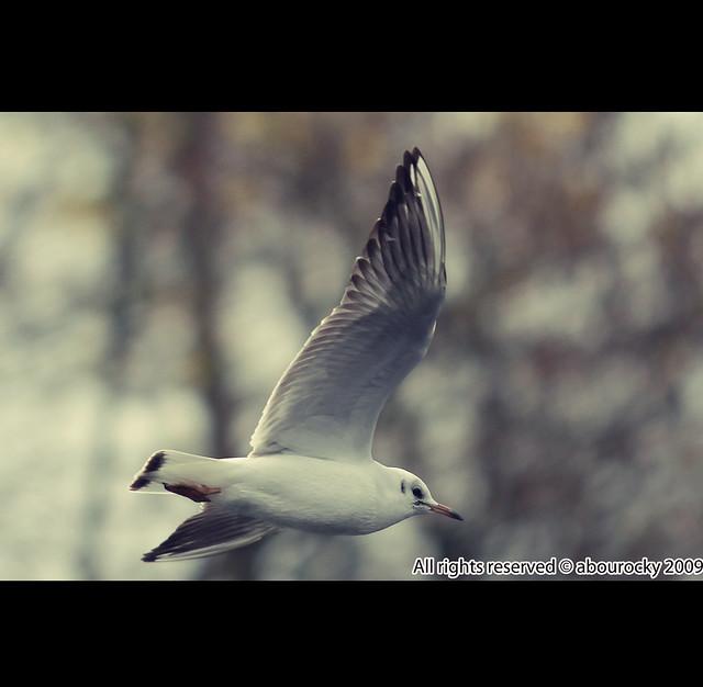 flyingfree合唱简谱