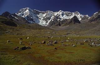 Lamas et hautes montagnes