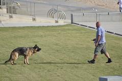 dog(1.0), pet(1.0), police dog(1.0),