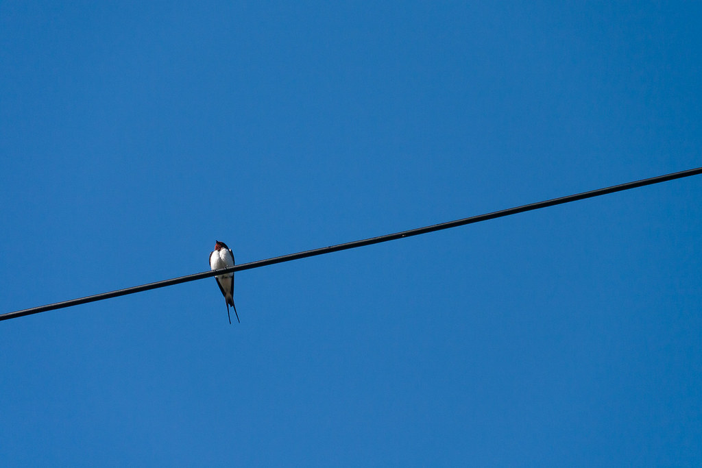 Minimalist Swallow