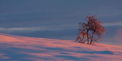 winter light snow mountains nature norway sunrise landscape warm colours lys beitostølen winterwonderland pinkclouds soloppgang jotunheimen beitostolen canonef70200mmf4lisusm naustvik canoneos40d jarlenaustvik