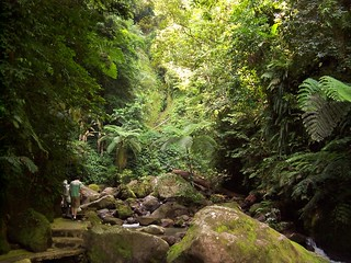Philippines Jungle