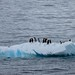 Penguins on an Iceberg by Princess Cruises