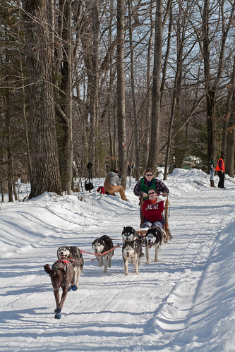4379835718 a83c9b9d41 Nice Sled Dog Racing photos