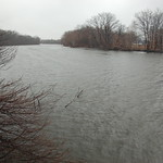 Charles River, 24 February 2010: Light rain, very grey