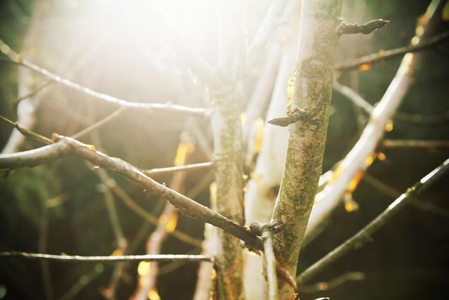 tree, glare, sun, spring