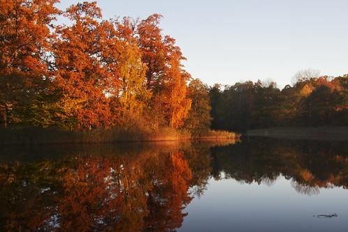 autumn trees sunrise river dawn sweden sverige stångån östergötland canonefs1785mmf456isusm bjärkasäby canoneos7d ginordic1