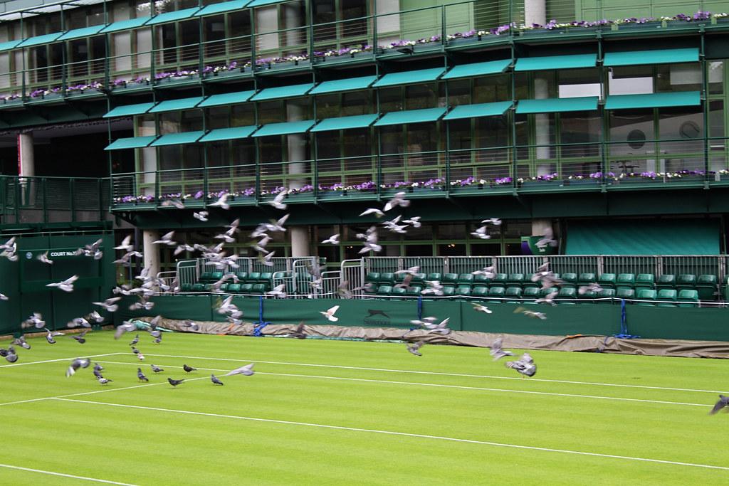 Wimbledon Court 19