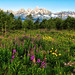 Wildflowers in the Tetons by Jeff Clow