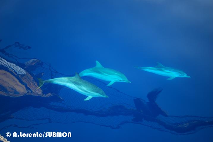 cetáceos en libertad
