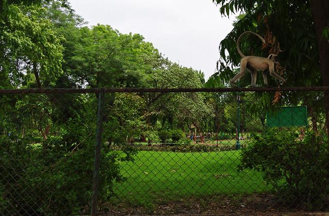 Parimal Garden Ellisbridge Ahmedabad Park Places To See Restaurants Hotels Attractions Trodly
