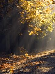 Autumn near Freiberg