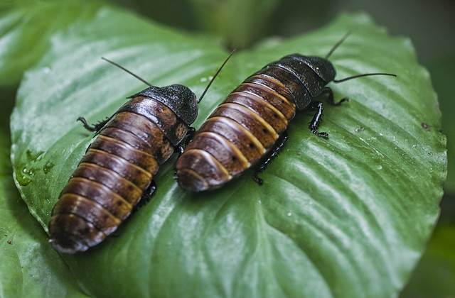 fear of cockroaches essay