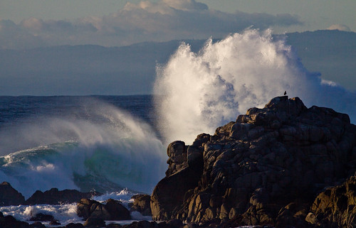 ocean california county sunset seascape bird rock canon landscape coast photo monterey surf waves alone power pacific action gull tide wave spray photograph carmel coastline northern firm crashing 50d explorer36 familygetty gettyvacation2010