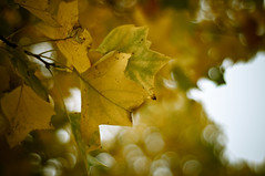 UVic Autumn
