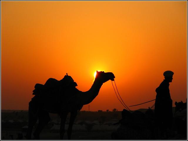Camel safari by CC user manojvasanth on Flickr