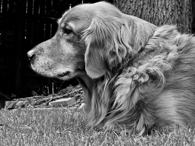 Oklahoma Service Dog Laws