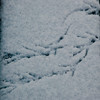 bird's track in the snow on a bench by -Jérôme-