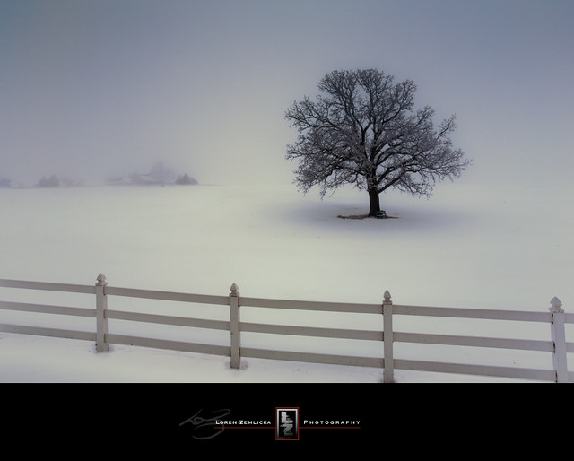 [Pics] Flickr Spotlight – Lonely Trees