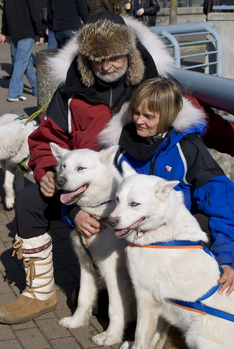 4381607098 5a432ebdc3 Sled dogs in Yaletown