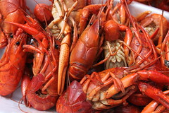 shrimp, animal, seafood boil, dendrobranchiata, caridean shrimp, crustacean, seafood, invertebrate, food,