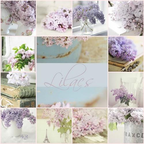 ~Lilacs...