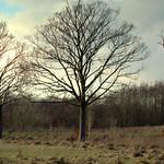 Three Trees in Haslam Park