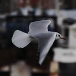 bird3-flickr
