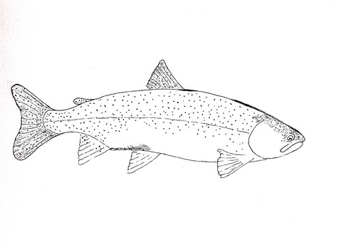 brook trout coloring page - free coloring pages of brook trout