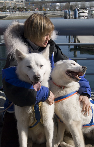 4381604684 1cb5b71a1b Sled dogs in Yaletown