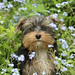 Small photo of Dog Amid Blue Flowers
