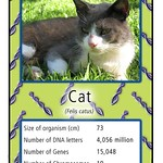 Genome Trumps (Cat)